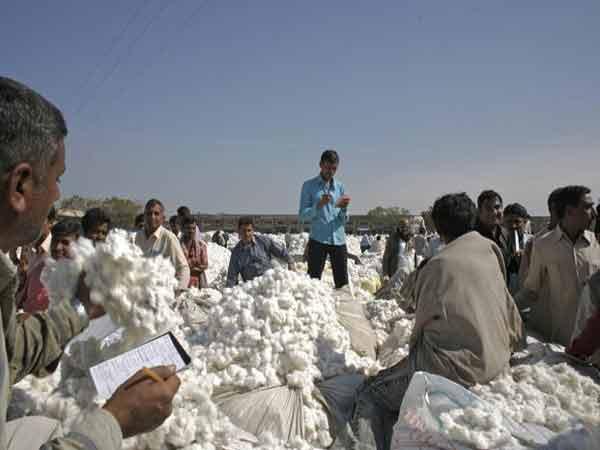 Cotton-mart1